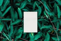 Wit boek met groen blad Royalty-vrije Stock Foto