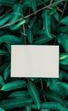Wit boek met groen blad Royalty-vrije Stock Afbeelding