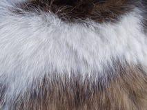 Wit-bruin zes kattentextuur royalty-vrije stock fotografie