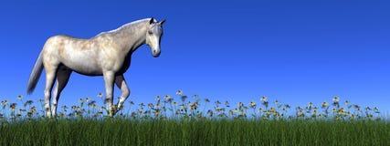Wit 3D paard - geef terug Royalty-vrije Stock Foto