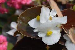 Wit de aardlandschap van de bloemenappel Royalty-vrije Stock Foto's