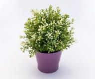 Wit - de groene plastic decoratieve bloem in een violette plastic pot is op een witte achtergrond royalty-vrije stock foto
