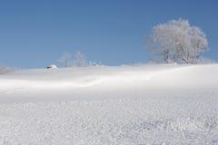 Wit de winterlandschap met een snow-covered boom Royalty-vrije Stock Fotografie