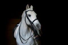 Wit dressuurpaard Royalty-vrije Stock Afbeeldingen