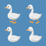 Wit Duck Illustration Bundle Royalty-vrije Stock Foto