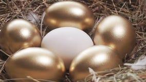 Wit ei en gouden eieren stock videobeelden