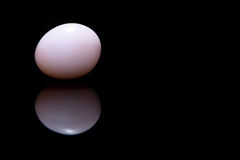 Wit ei op zwarte achtergrond Royalty-vrije Stock Afbeelding