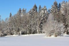 Wit en blauw de winterlandschap Stock Fotografie
