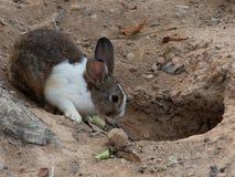 Wit en bruin konijn voor het gat in een dierentuin royalty-vrije stock fotografie