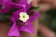 Wit en gele bloem stock afbeelding
