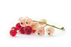 Wit en rode aalbessen Royalty-vrije Stock Afbeeldingen