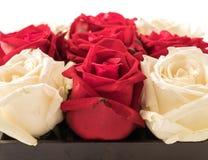 wit en rood nam op wit toe Royalty-vrije Stock Afbeeldingen