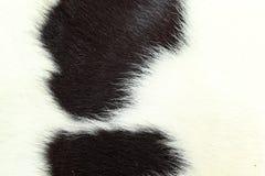 Wit en zwart achtergrondkoebont. Royalty-vrije Stock Foto