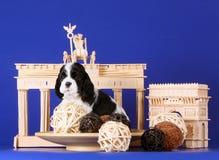 Wit en zwart puppy op een blauwe achtergrond Hond en decoratie Duimnagel oude structuren Stock Afbeelding