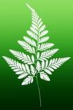 Wit Fern Leaf Silhouette Royalty-vrije Stock Foto's