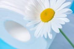 Wit geperforeerd toiletpapier met de geur en madeliefje op een blauwe achtergrond royalty-vrije stock foto's