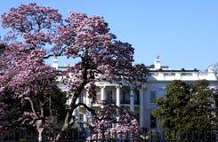 Wit huis in de lente Royalty-vrije Stock Foto