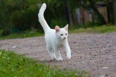 Wit katje. Stock Fotografie