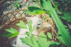 Wit Katje in de Retro Mand Royalty-vrije Stock Foto