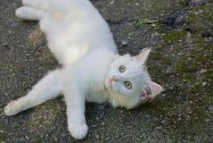Wit katje die op het grijze asfalt op de straat liggen stock foto