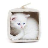 Wit katje in een mand. Stock Foto's
