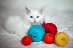 Wit katje Maine Coon met verwarring van draden Royalty-vrije Stock Foto's