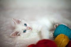 Wit katje met verwarring van draden Stock Foto's