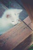 Wit Katje op Houten Retro Treden Stock Afbeeldingen