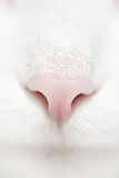 Wit kattengezicht Stock Fotografie