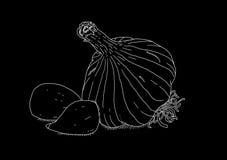 Wit knoflook op zwarte achtergrond Royalty-vrije Stock Afbeeldingen