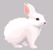 Wit konijn Royalty-vrije Stock Afbeelding