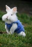 Wit konijn Royalty-vrije Stock Fotografie