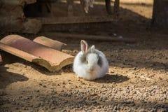 Wit konijn 3 Royalty-vrije Stock Afbeelding
