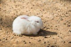Wit konijn 4 Royalty-vrije Stock Afbeelding