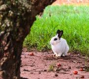 Wit konijn in aard Stock Afbeeldingen