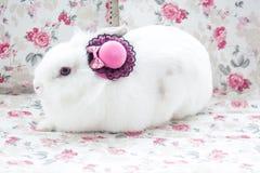 Wit konijn in beatuful roze bonnet royalty-vrije stock afbeelding
