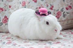 Wit konijn in beatuful roze bonnet stock foto's