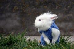 Wit konijn die zich in groen gras bevinden Stock Foto's