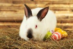Wit konijn in hooi met geschilderde eieren op bruine houten achtergrond Stock Foto