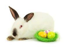 Wit konijn met nest en eieren die op wit worden geïsoleerd Stock Afbeeldingen
