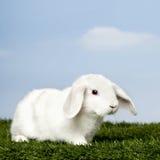 Wit Konijn op gras royalty-vrije stock foto