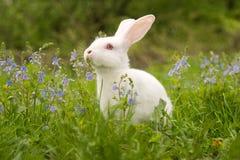 Wit konijntje Stock Afbeeldingen