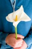 Wit lilly op handen Stock Fotografie