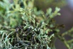 wit mos growe in de zomerbos royalty-vrije stock afbeeldingen