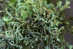 wit mos growe in de zomerbos stock foto