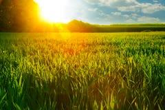 Świt na pszenicznym polu Zdjęcia Royalty Free
