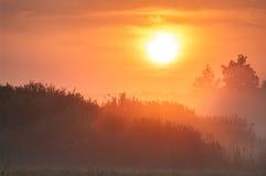 Świt nad treetops w mgle Obrazy Royalty Free