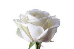 Wit nam bloemblaadjes toe stock afbeeldingen