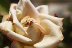 Wit nam de bloem van de aardfoto toe Stock Foto