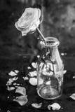 Wit nam in fles op zwarte achtergrond toe Stock Afbeeldingen